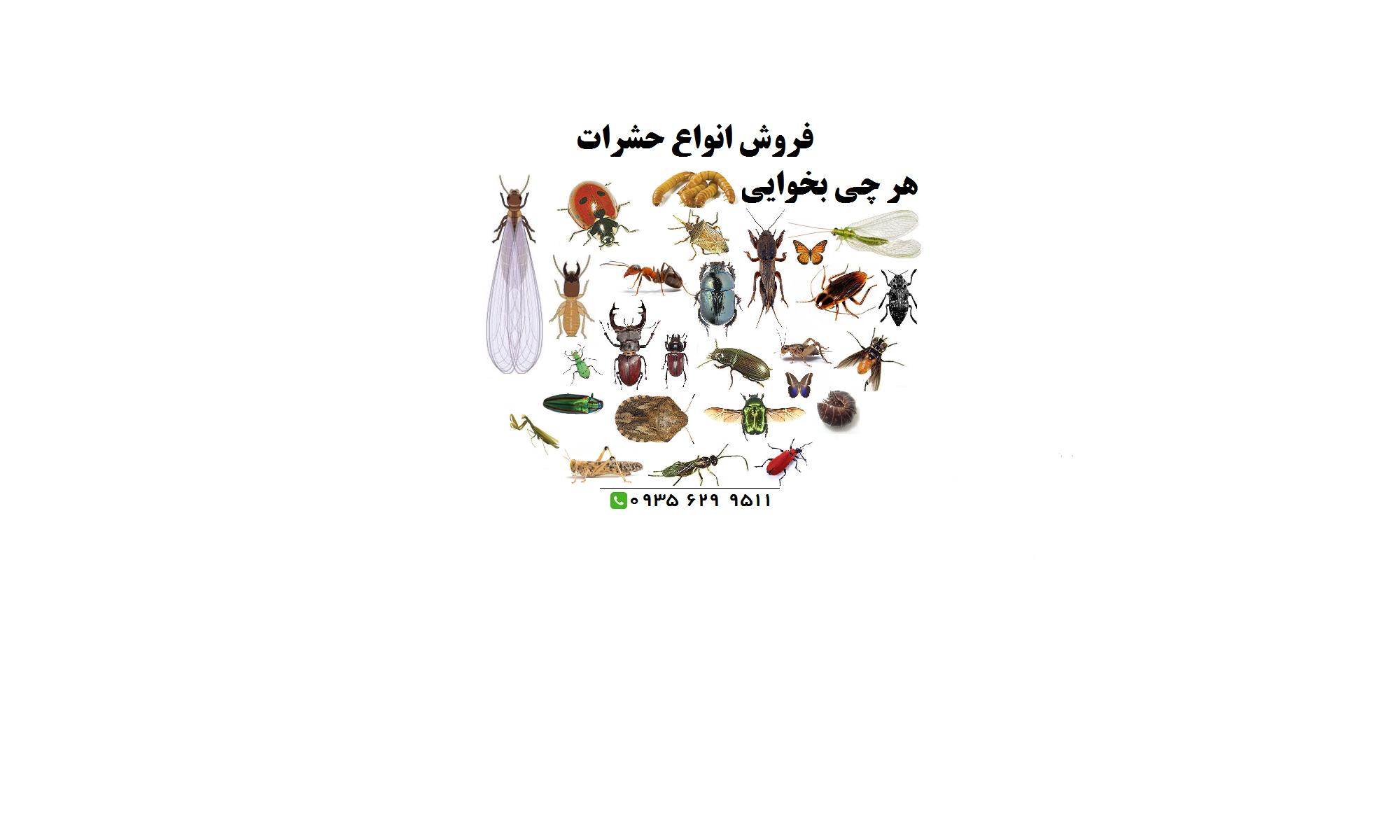 تامین و فروش حشرات زنده خشک Iran Insect