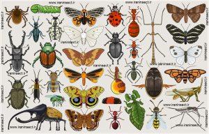 IRAN INSECT سایت فروش حشرات زنده ( www.iraninsect.ir) : طرح جابربن حیان | حشرات | طرح جابربن حیان فروش حشرات زنده خشک شده اتاله شده یا داخل الکل سفید برای طرح جابر